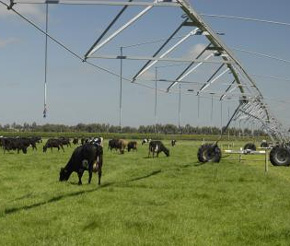 new zealand dairy farmers use center pivots to enhance pasture