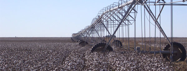cotton irrigation with pivot