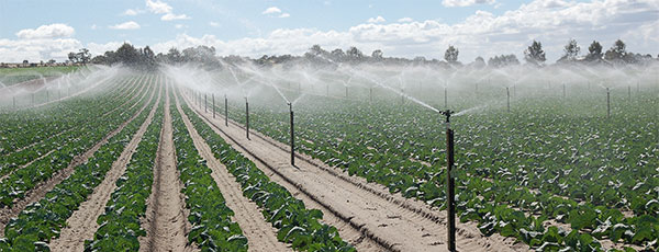 saline waters for irrigation
