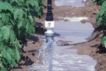runoff under low pressure central Pivot irrigation