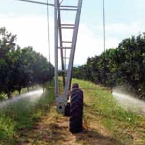 Pivot irrigation of orange trees